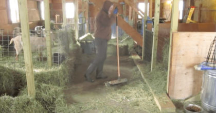 Farmer turns on his camera and captured THIS… Now I can't stop watching, It's hilarious!!