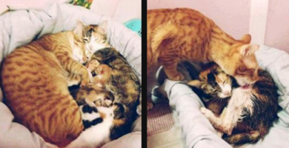 Father cat steps up and helps mother cat giving birth, but then… The end result is just beautiful!
