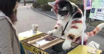 Giant cat starts selling potatoes, but then he looks up at the camera…
