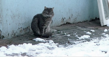 He Noticed A Cat Outside Freezing In The Cold, But Then Comes Up With The Most Amazing Thing!