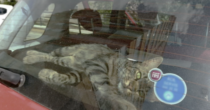 Sad and lonely street cat was so desperate for some love and a home, he broke into a car… Amazing!
