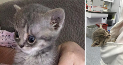 Kitten is given a second chance and won't stop purring in her pocket after someone rescued him…
