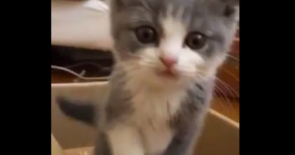 They made this kitten a special box to play in and the results are PRICELESS… Just Watch!