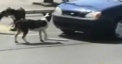 Man threatens to run over dogs and honks Horn, but then… He gets EXACTLY what he deserved!