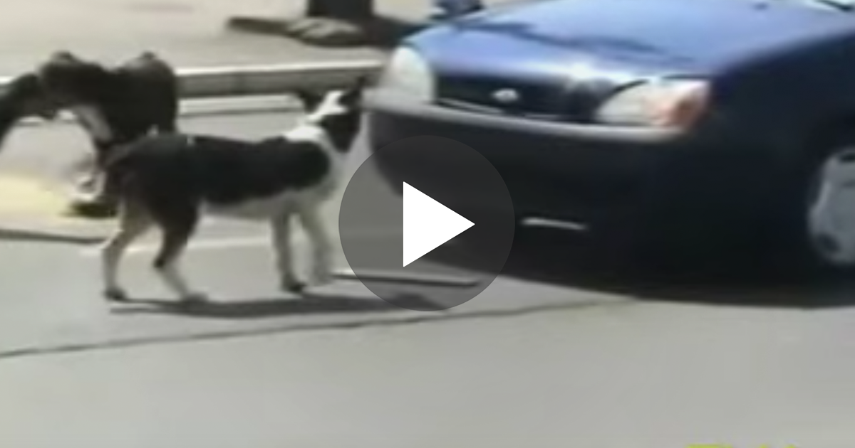 Loud Car Horn >> Man threatens to run over dogs and honks Horn, but then… He gets EXACTLY what he deserved! | The ...