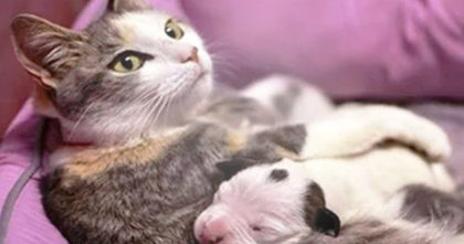 Puppy was dying, but WATCH how this cat mother saves him… This is the SWEETEST thing ever!