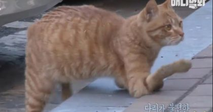 """She Found A """"Broken"""" Cat Rejected By Everyone, Begging For Help… Watch What She Does Next!"""