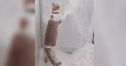 She Opened The Door, But When Kitty Discovers The Snow, Watch What Happens Next… Hahaha!!