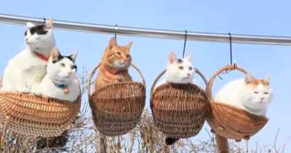 She Puts Her Cats Inside Little Hanging Baskets…And The Results Are Just TOO CUTE For Words!