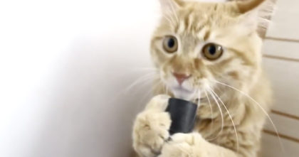 Watch The Cat's Reaction When They Introduce Him To A Vacuum Cleaner… I Can't Stop Laughing, LOL.