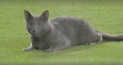 Cat Steals The Show And Stops Entire MLB Game When He Runs Out On Camera… Hahahaha!!