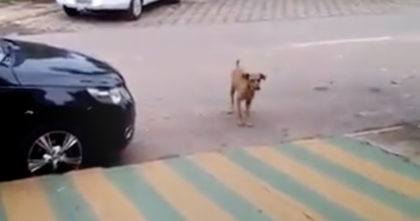 Dog walks up to a parked car, but when he hears the music playing… I never expected THIS.