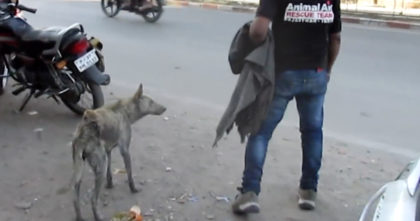 Dog wandered around for days with a hole in her back… It broke my heart when I saw her face