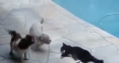 Dogs won't stop annoying the cat, but when I saw the cat's response to it, I was In STITCHES!!