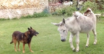 Donkey makes friends with cats, but when their owners came see… Now watch what they're doing!