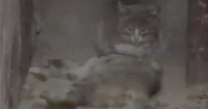 Man notices kitten next to dead mother cat, but what he saw next… I have no words for THIS.