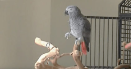 Parrot Looking Out The Window, But Then The Piano Starts Playing… I Can't Believe THIS Reaction!