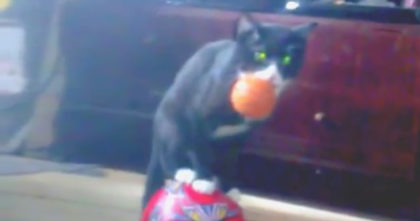 She asked her cat to balance on the ball. When I saw the cat's reaction… Now I'm in stitches!!