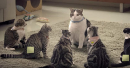 She calls for the cats, but when you see how they respond… You won't stop laughing, hahaha!!