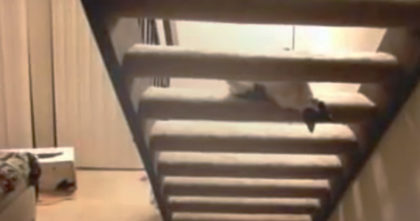 They saw their cat laying on the stairs, but no one was prepared for what the cat did next…