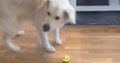 Watch puppy's reaction when he gives him a sour lemon for the first time…Now I can't stop laughing!