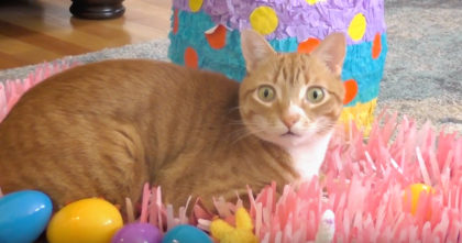 Watch the cats reactions when he throws them an Easter party… I could watch this forever, LOVE IT!!