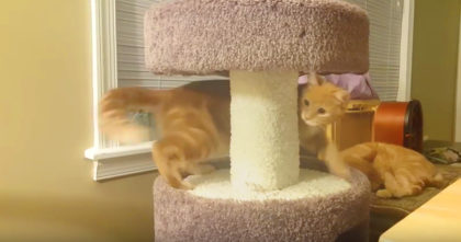 Cat discovers 'fuzzy toy' around the corner, but he doesn't relize what it is until it's too late… Hahaha!!