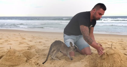 Everyone thinks it's his pet dog, until they realize the hilarious truth… I never expected to see THIS