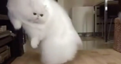 When You See This Huge Fluff Ball Jumping Around… Your Jaw Will Drop, WOW.