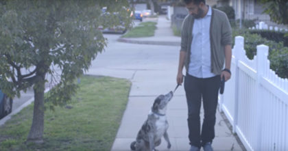 Man adopts senior dog from shelter, but when the dog looks up at him, it brought me to tears