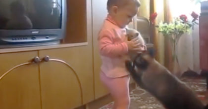 Toddler tries to hold the kitten, but when his mother notices it, she just CAN'T handle it… OMG