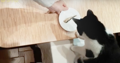 They made a restaurant just for cats — Now keep your eyes on the cat, you'll love every minute!