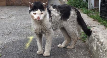 Cat covered in dirt and grime with matted fur hobbles up to women and meows for her to help him