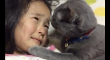 Kid crying, needing someone to comfort her, when the cat comes closer, it's almost more than I can handle