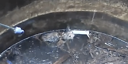 Drowning Kitten Desperately Hangs On In The Hope Of Being Saved – Now Watch When He See Rescuers.