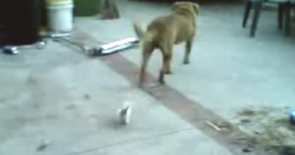 Kitten abandoned by it's mother follows the family dog – Now watch how she responds when she sees it