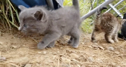 Kitten Crying For Someone To Help, Then He Turns Around His Chair and Sees Cutest Little Surprises Ever