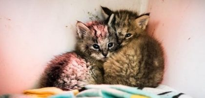 """Kittens"" Abandoned On Dirt Road Turned Out To Be Totally Different Than What People Thought"