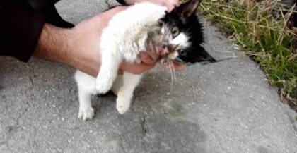 Man finds kitten with his head stuck in glass bottle, trying to find some food – Then he picks up the hammer
