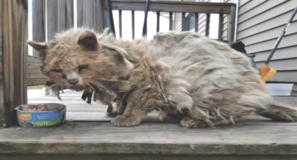 Cat living on streets, scrounging around for something to eat, then rescuers notice his terrible situation
