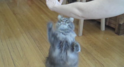 She Adopted A Cat, But After Six Months, She Never Expected His Reaction When She Puts Her Hand Up