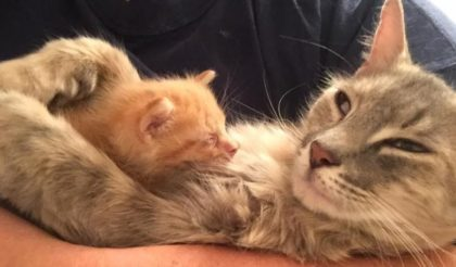 She's grieving for her lost babies when they all died, but then she saw the tiny orphaned rescue kitten