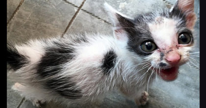 Terrified Kitten Was Abandoned, Left To Die… Now Watch His Rescue As Rescuers Approach Him