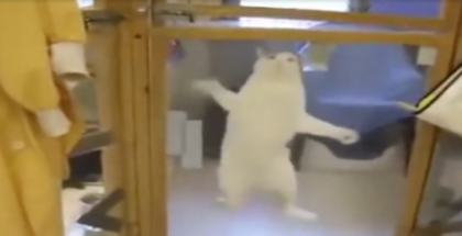 Watch The Reaction When This Shelter Cat Sees His Favorite Human Coming Into The Room