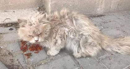 Women finds cat begging for someone to help, Then she discovers why he's so scared and it broke my heart