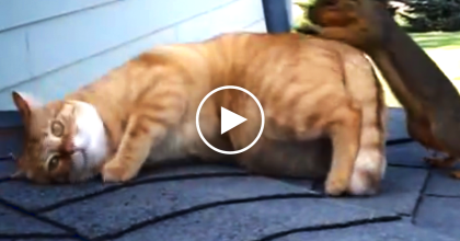 They Saw A Cat On The Roof, So They Got The Camera… You'll NEVER Believe What They Recorded!