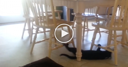 Their Cat Was Making Some Noise Under The Table, But I Can't Believe What They Saw!  I'm Speechless…