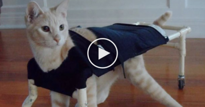 He Was Crippled And Couldn't Walk, But Then His Owners Did Something Amazing… I Love This!