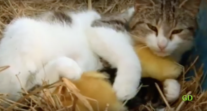 They Couldn't Find The Ducklings, But They Made A Surprising Discovery… This Is AMAZING!