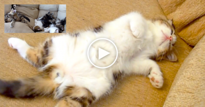 These Funny Cats Sleeping In Weird And Cute Positions Will Make Your Day! Just Watch!
